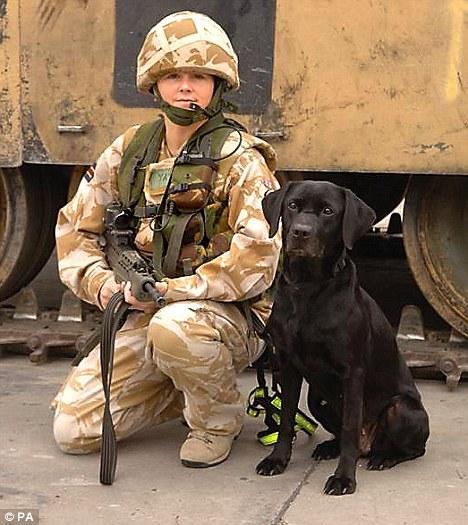 army_sniffer_dog