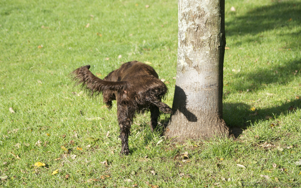 dog-peeing-on-weeds