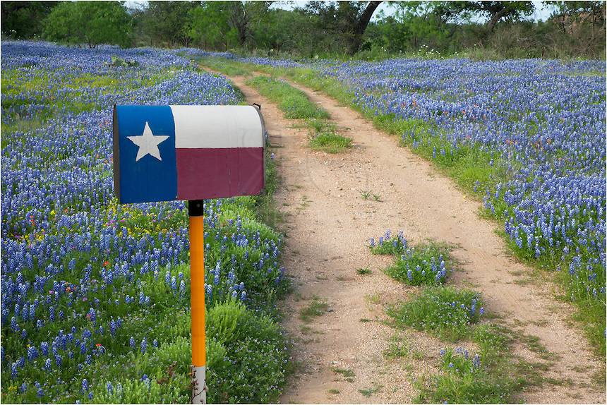 Bluebonnets along a Dirt Road and a Texas Flag Mailbox