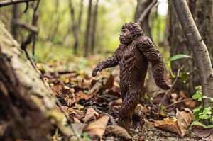 nature walking animal strong