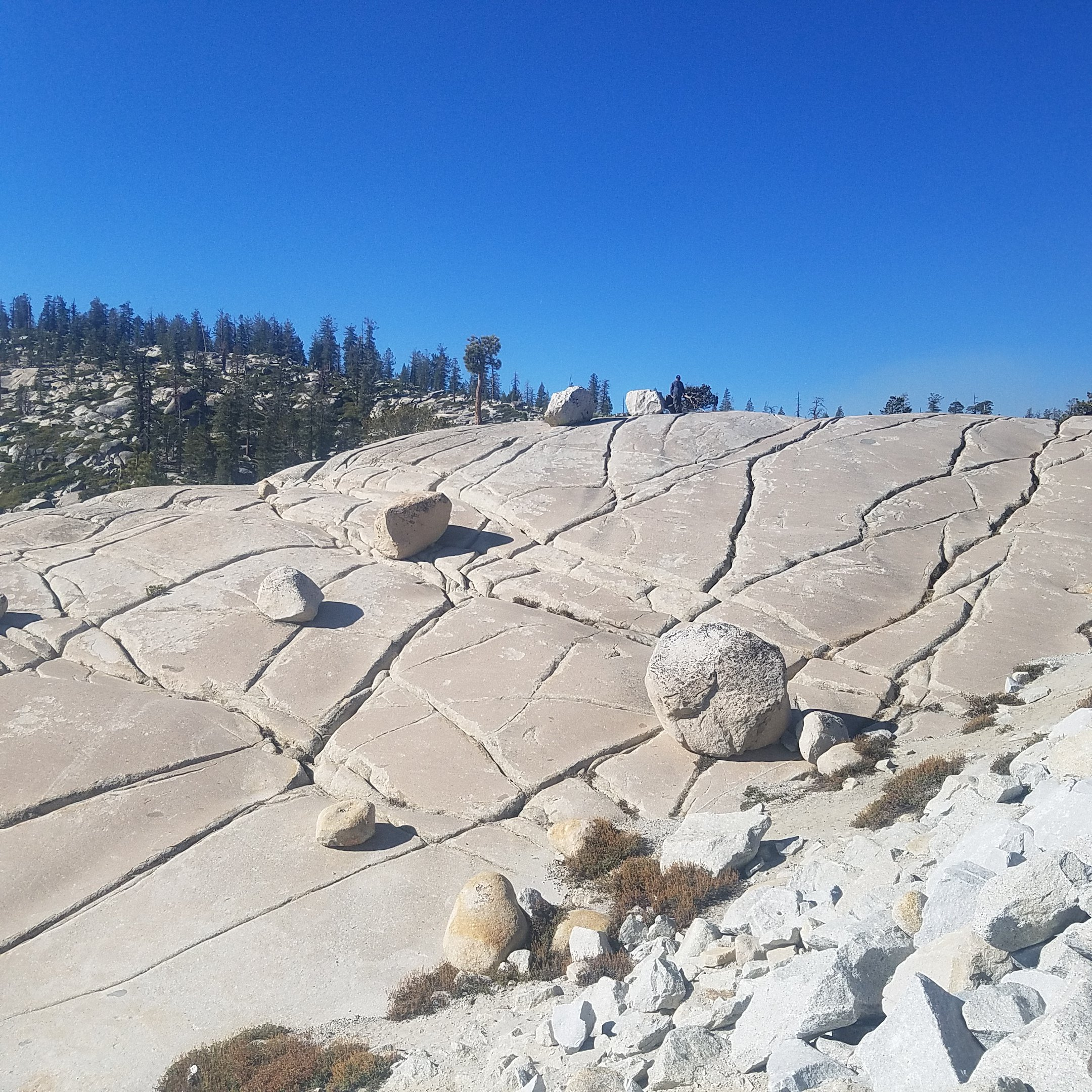 #yosemite,tiogapass,#olmsted