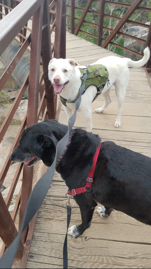 Dexter and Comet on the bridge